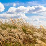 秋は乾燥の季節ですが…最近は高湿度の日が続いてます